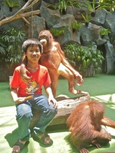 Ken was taking picture with a couple of orangutan