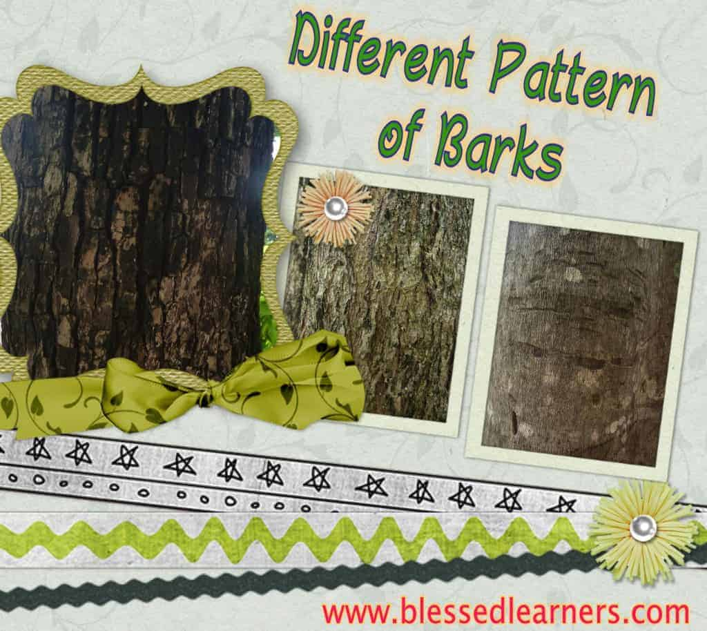 These are some bark patterns that we got from the bark rubbing activity.