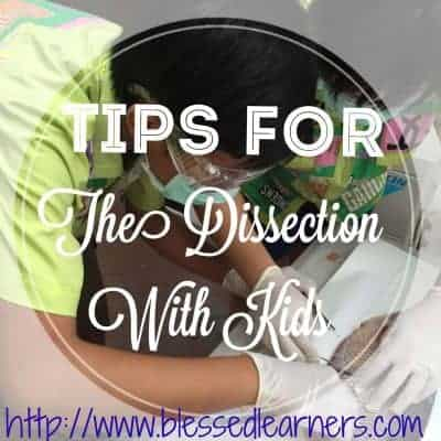 Tips for The Dissection with Kids