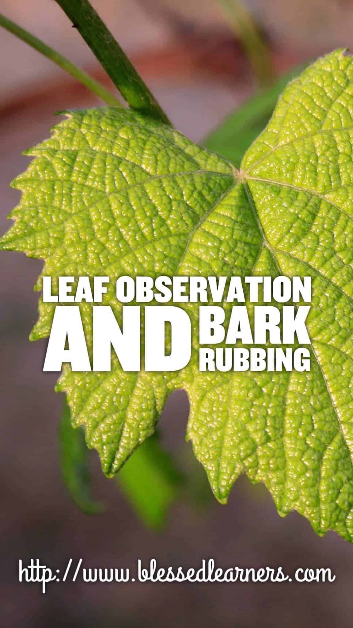Leaf Observation and Bark Rubbing