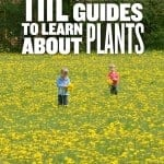Resources to Learn about Plants
