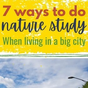 Here are some ways to do nature study when living in a big city. Find ways to make your homeschool curriculum work in an urban area.